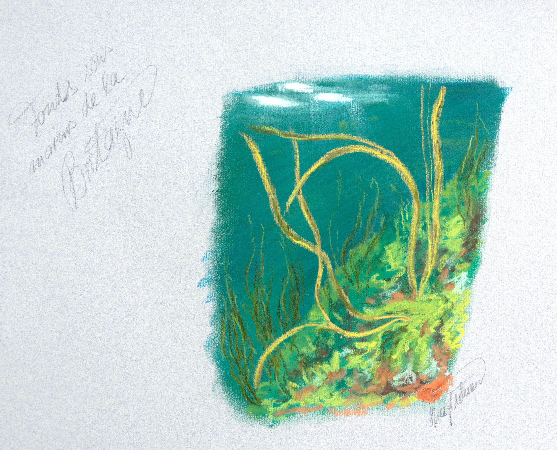Studie von Algen unter Wasser, Bretagne