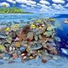 Tropisches Korallenriff