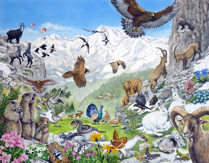 Tiere im Gebirge