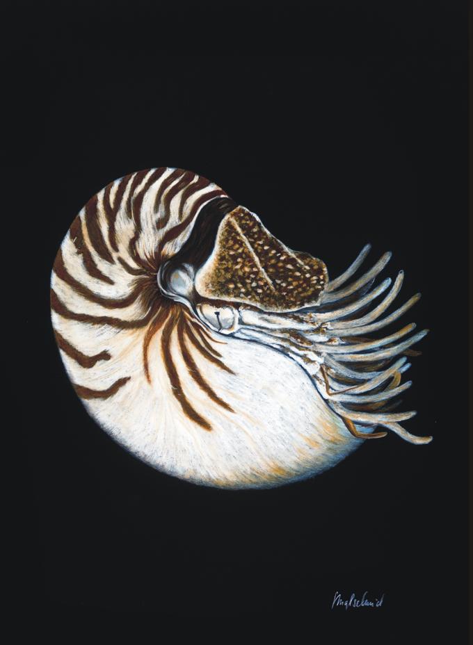 Nautilus - Ölpastell