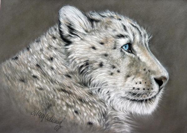 Schneeleopard - Pastell