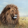 Löwe in Serengeti - Pastell