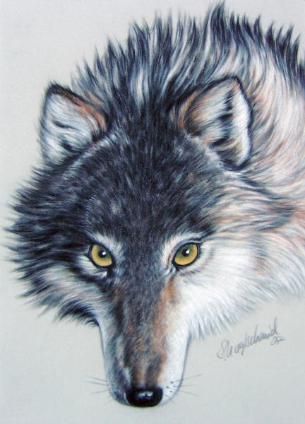 Wolfsblick - Pastell