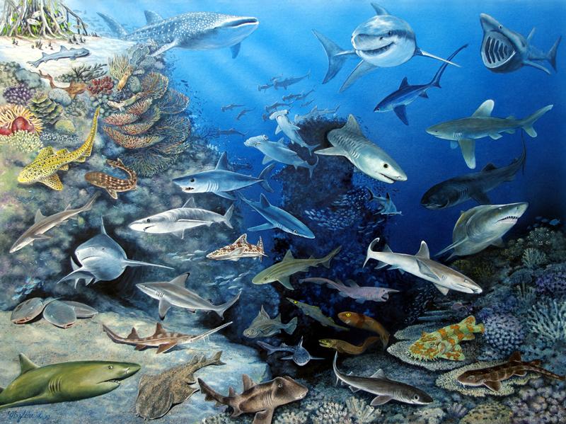 Haie der Welt Fine-Art-Print