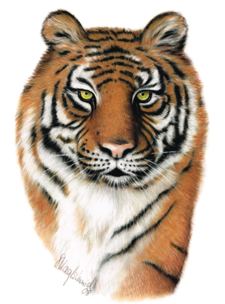 Tigerportrait Fine-Art-Print