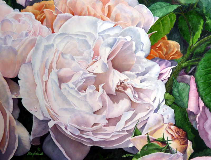 Weisse Rose (Westminster) Fine-Art-Print
