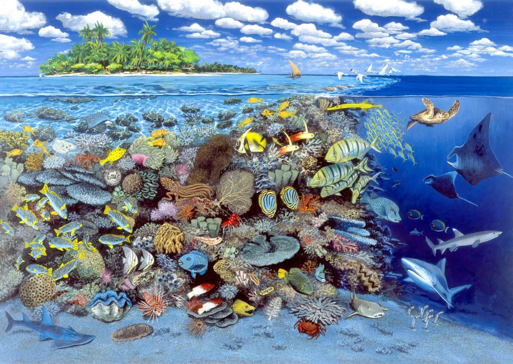 Tropisches Korallenriff Fine-Art-Print