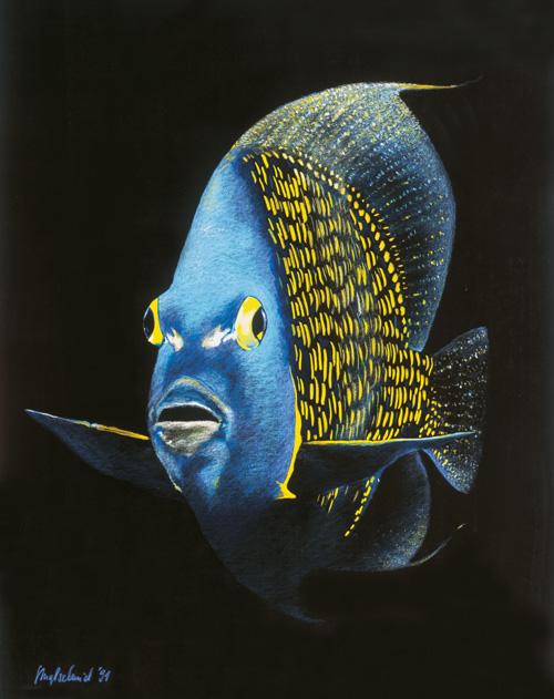 Kaiserfisch Fine-Art-Print