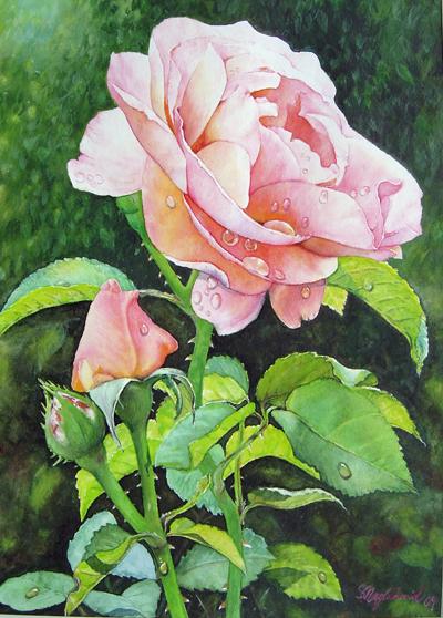 Rosen nach dem Regen Fine-Art-Print