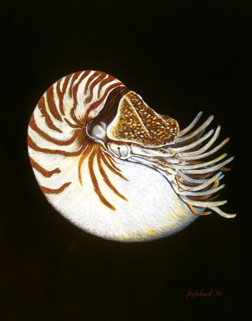 Nautilus Fine-Art-Print