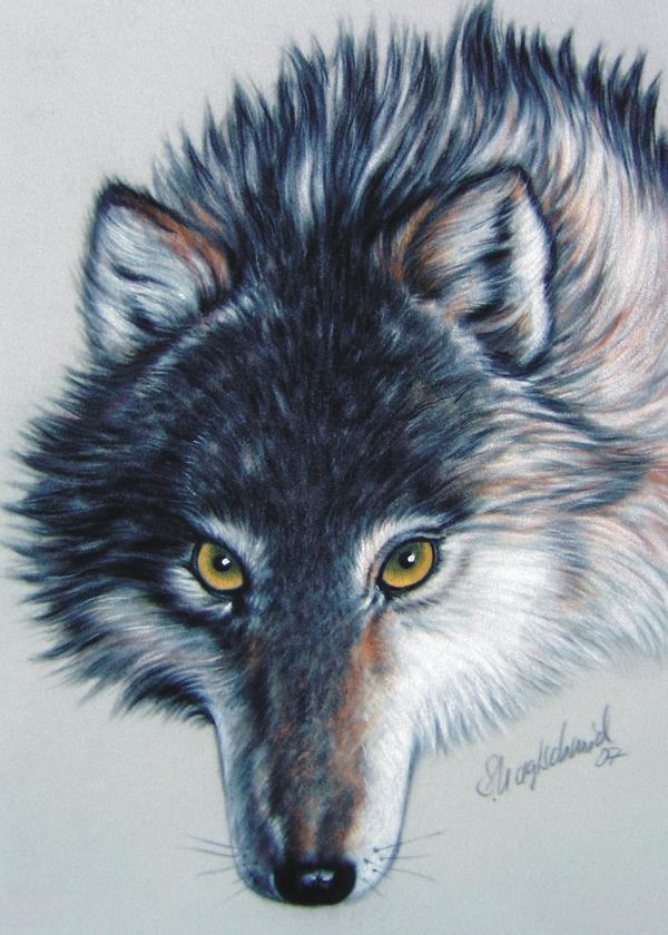Wolfportrait Fine-Art-Print