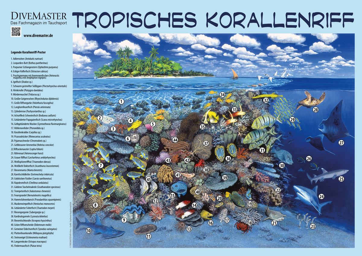 Tropisches Korallenriff -Print- DIVEMASTER Collection
