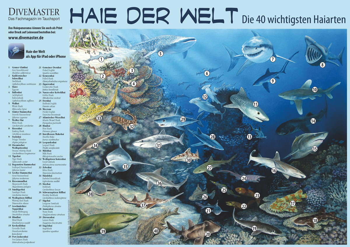 Haie der Welt -Print- DIVEMASTER Collection