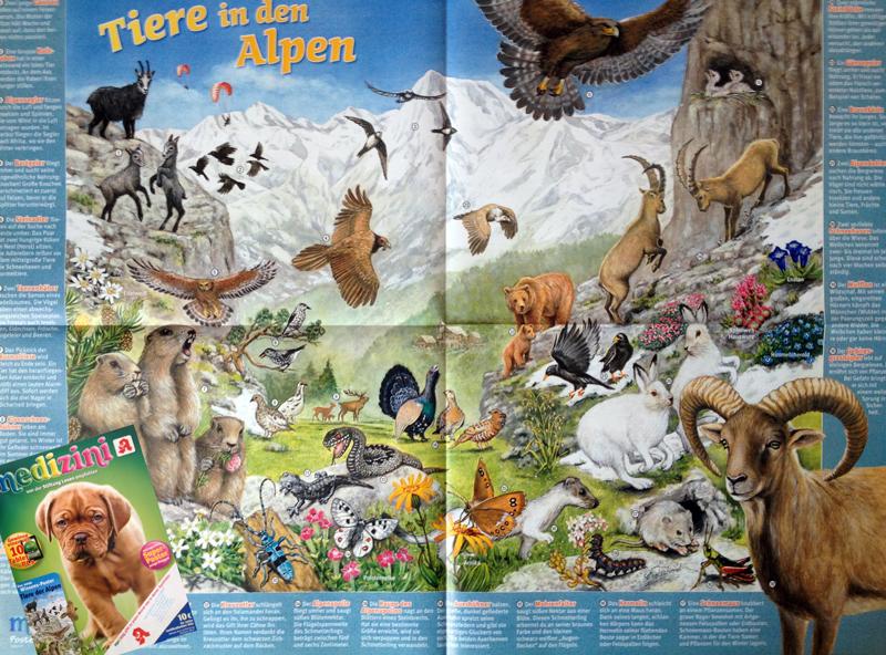 """Panoramabild """"Tiere der Alpen"""""""