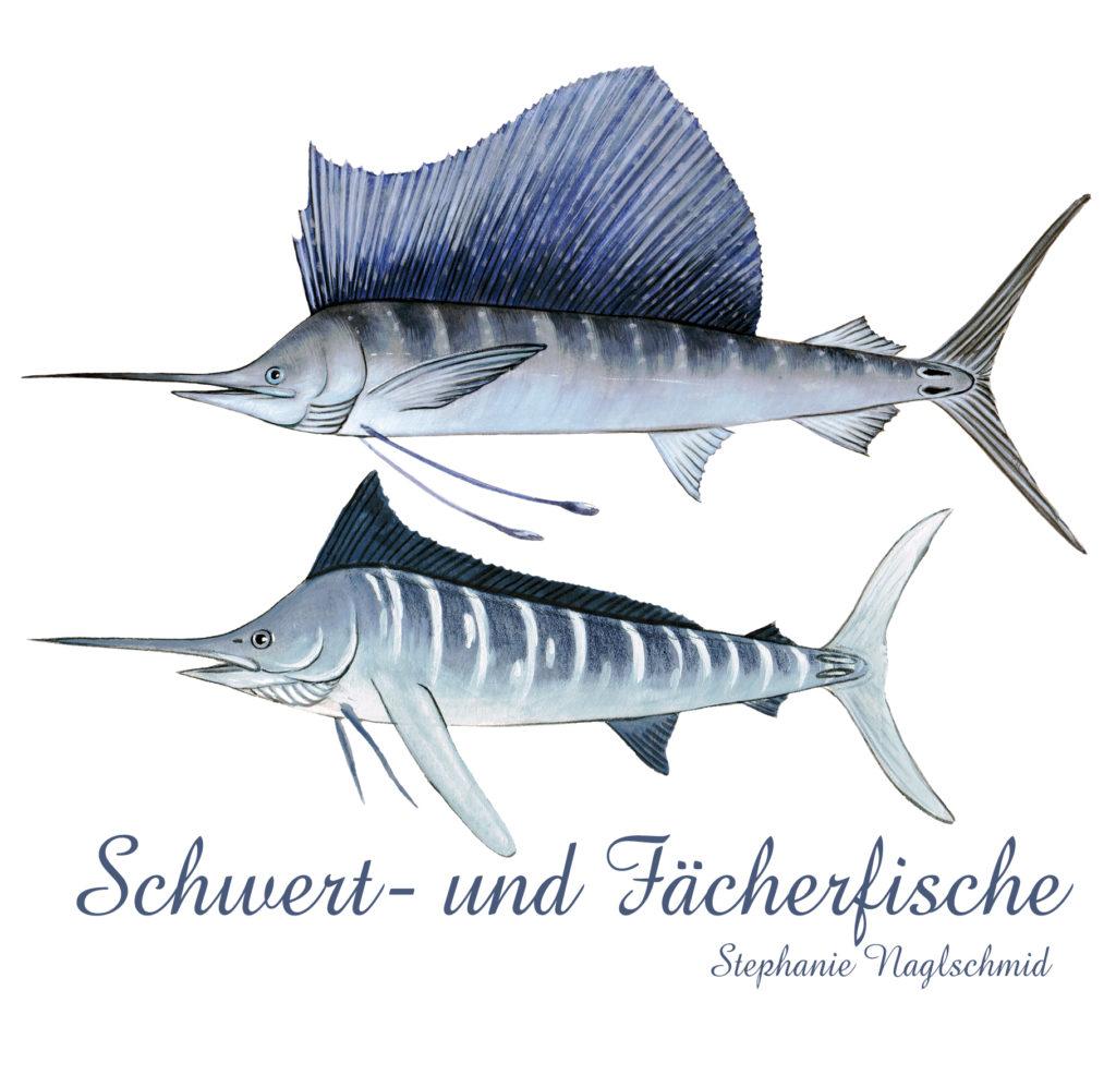 Illustration Schwertfische